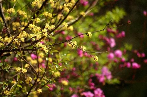 유후~봄이다~
